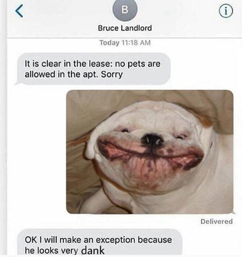 Meme chó