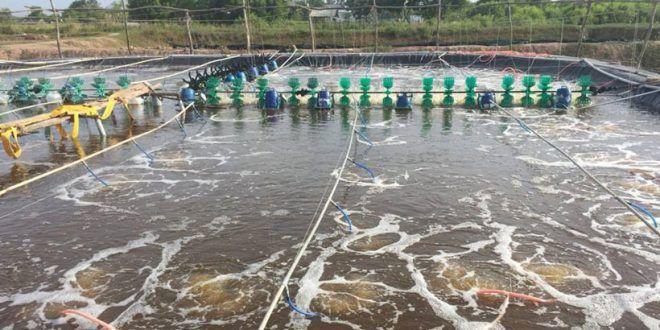 Tác hại của nước nhiễm phèn với sức khỏe